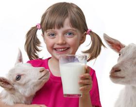 Плюсы и минусы козьего молока для человека