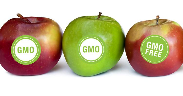 Яблоки с ГМО