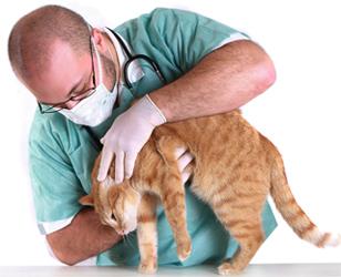 Ветеринар с кошкой