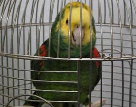 Заведение попугая