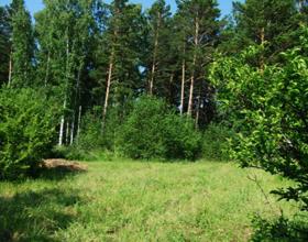 Участок у леса: плюсы, минусы и ньюансы