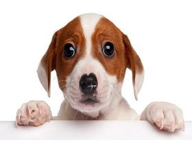 Плюсы и минусы заведения домашних животных