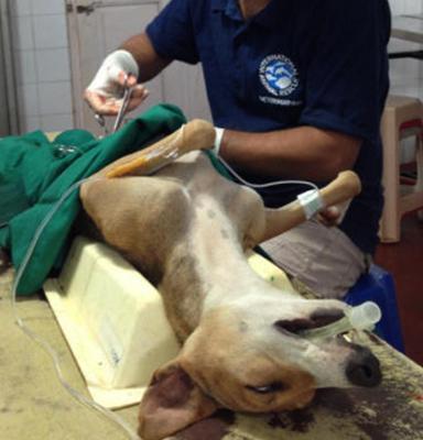Проведение стерилизации