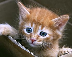 catt16