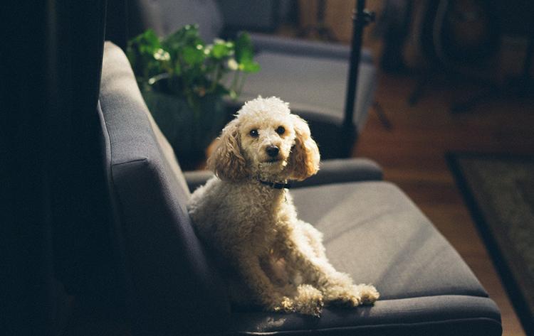Добрый пес