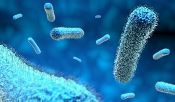 Как выглядят бактерии