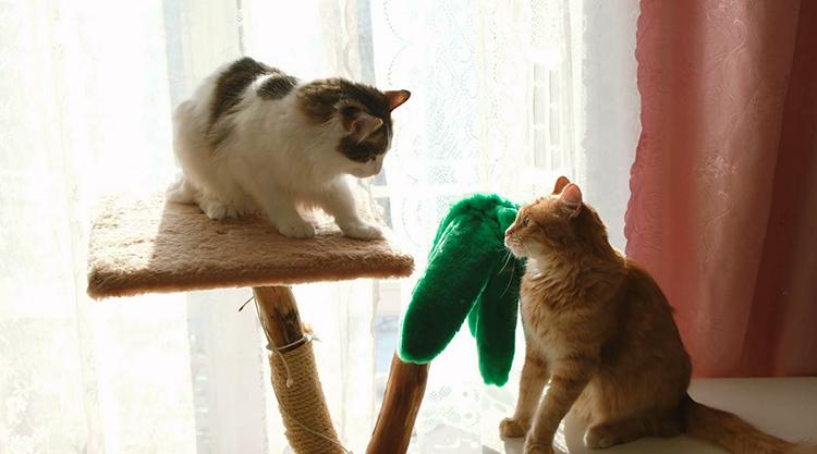 В доме 2 кошки