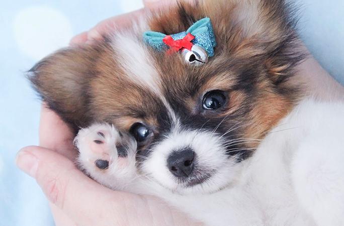 Милый щенок в руках