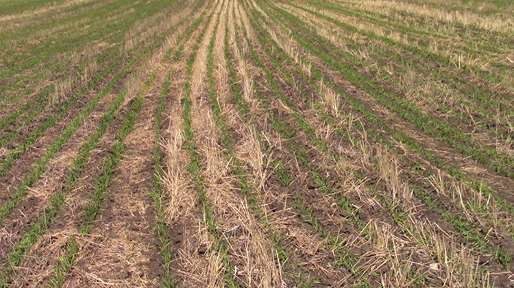 Почва после нулевой обработки