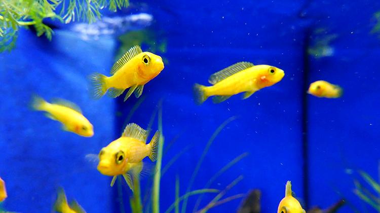 Мелкие рыбки