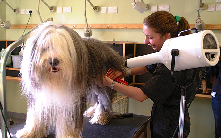 Грумер с собакой