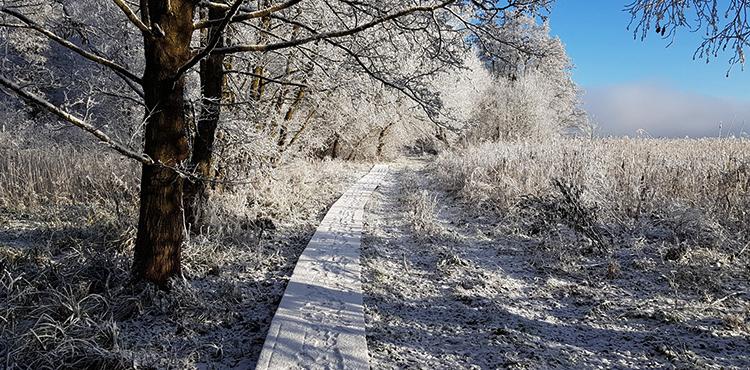 Тропинка зимой