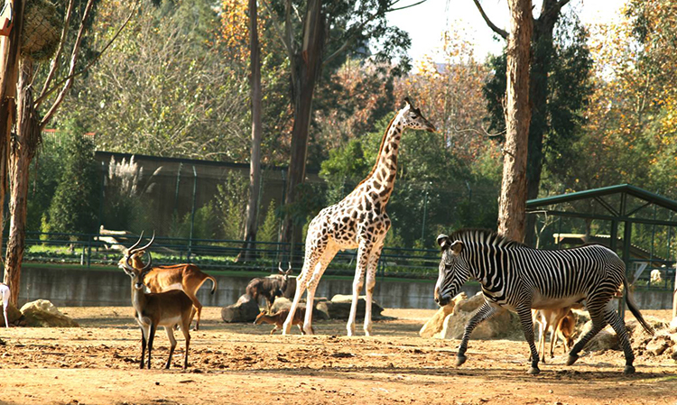 Нахождение животных в ззопарке
