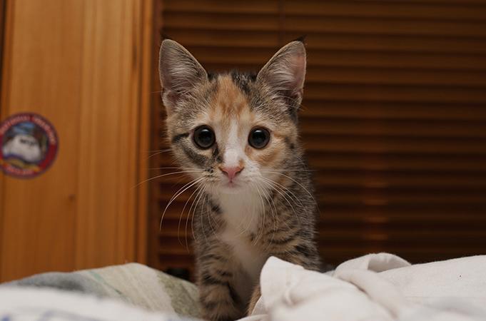 Котенок дома