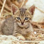 Стоит ли брать котенка с улицы — плюсы и минусы