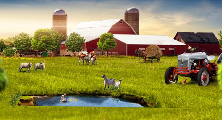 Вид крестьянско-фермерского хозяйства