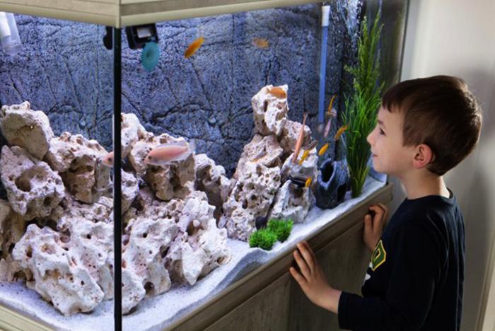 Ребенок смотрит на рыбок