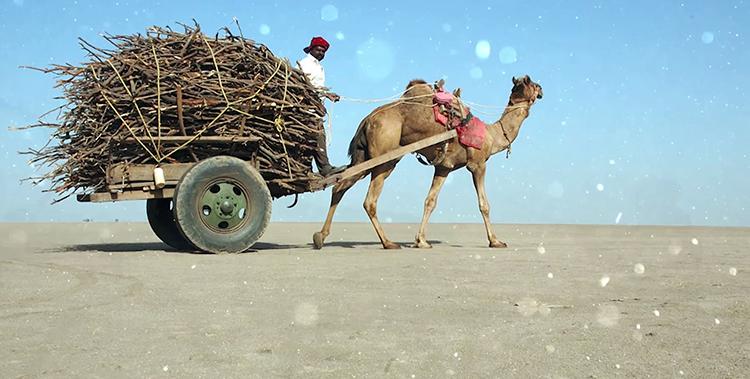 Транспорт на верблюде