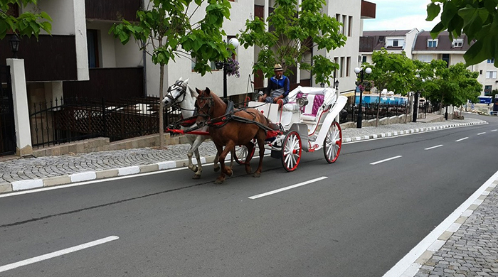 Карета с лошадьми