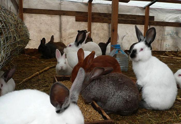 Много кроликов на даче