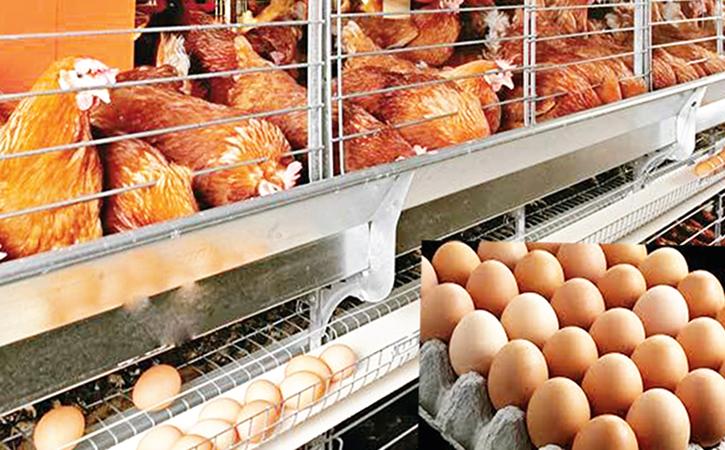 Бизнес на яйцах