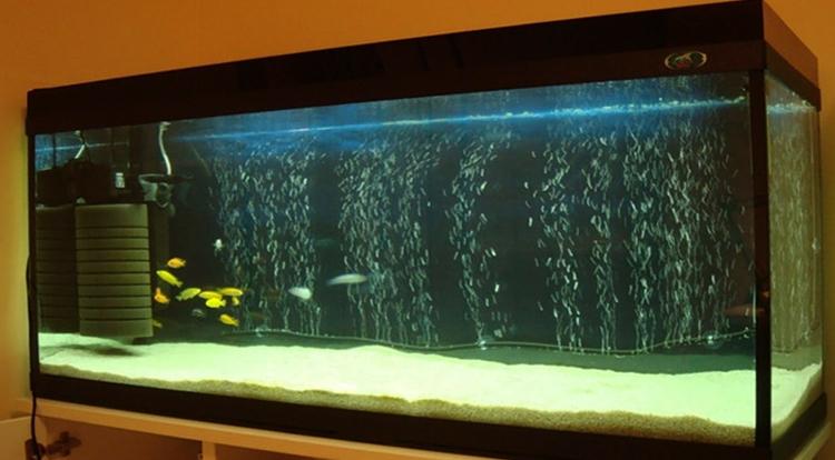 Флейта в аквариуме