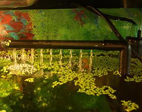 Флейта в аквариуме: плюсы и недостатки