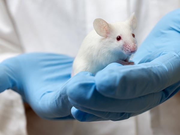 Мышь в руках