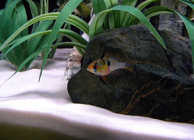 Кварцевый песок в аквариуме