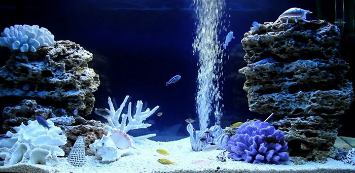Кварцевый песок и рыбки