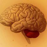 Инсульт мозжечка головного мозга: причины и последствия