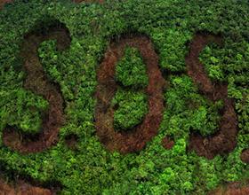 Минусы и плюсы вырубки лесов на земле