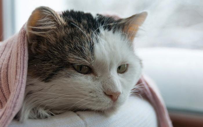 Кошка болеет после удаления зубов