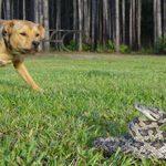 Если собаку укусила змея: последствия и что нужно делать