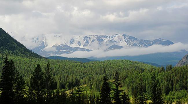 Природы Алтайского края