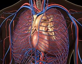 Тромбоз легких: причины и последствия
