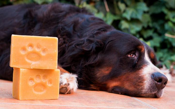 Собака и мыло
