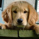 Если собака съела мыло — какие могут быть последствия и что делать