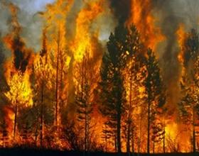 Последствия и влияние лесных пожаров