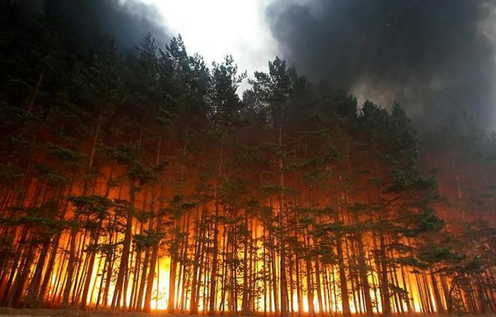 Лесной пожар в России в 2010
