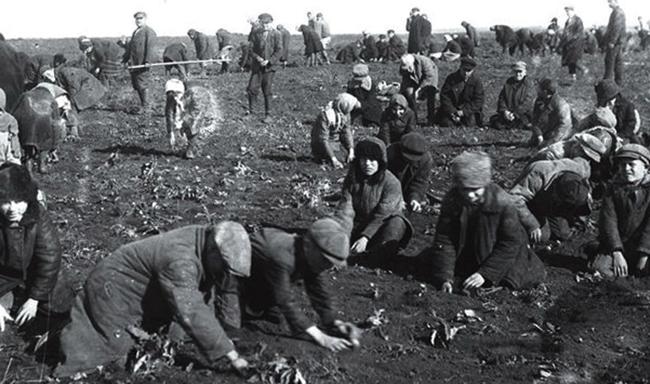 Люди в поле во времена голода