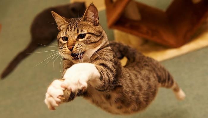 Кот пытается поймать муху
