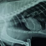 Пневмония у кошек: причины и последствия