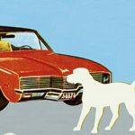 Если собаку сбила машина — последствия и что делать