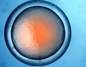 Донорство яйцеклетки и его последствия для донора