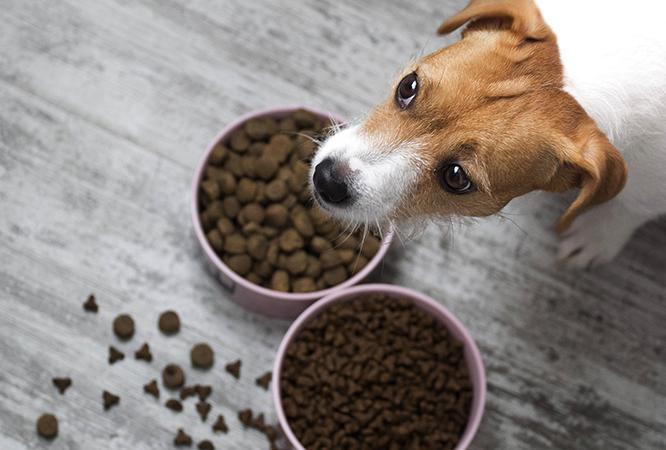 Плохой аппетит у собаки