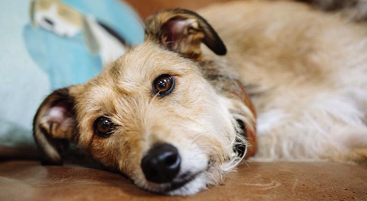 Собака после неудачной смены корма