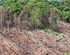 Негативные последствия вырубки лесов