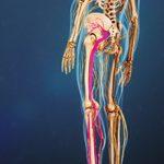 Защемление седалищного нерва: причины и последствия