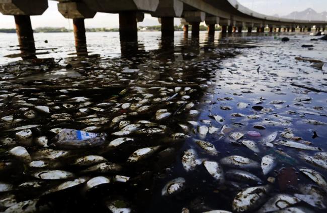 Смерть рыбы